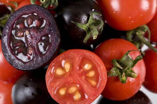 طعامنا مستقبلا: طماطم بلون بنفسجي