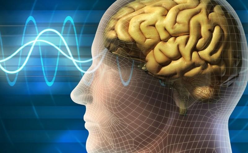 الذكريات ترتبط بالأماكن في الدماغ