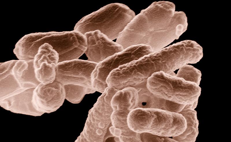 كبسولة من الفضلات قد تساعد في علاج لتهابات الأمعاء