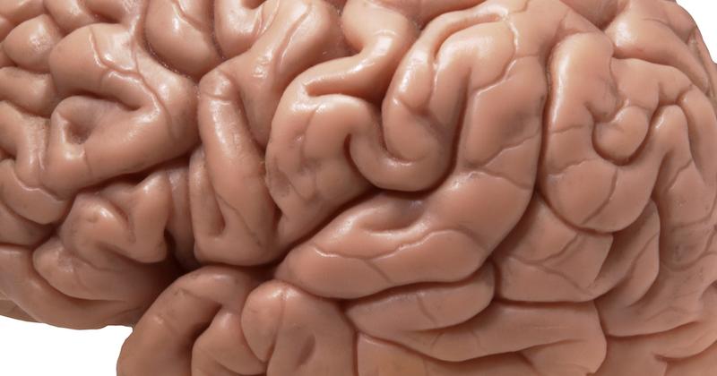 لماذا نحتاج للدماغ