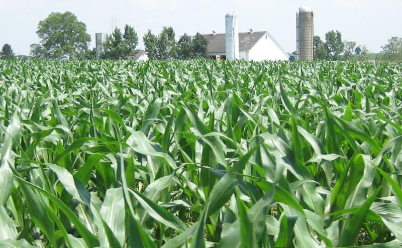 تطوير محاصيل مقاومة لمبيدات الأعشاب