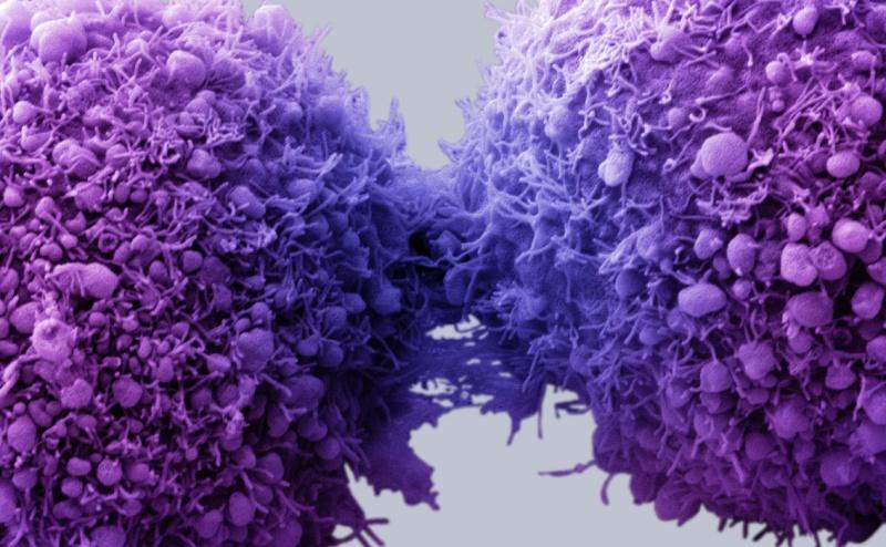 جوجل تصنع حبوباً للكشف عن السرطان والنوبات القلبية