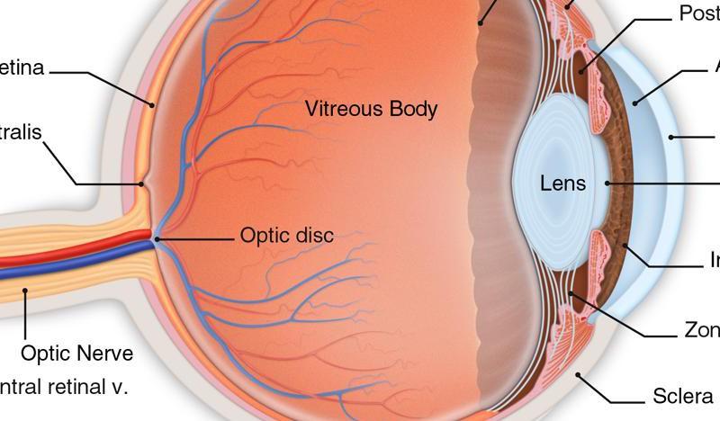 ما سبب النقاط العائمة في العينين عندما ننظر للسماء
