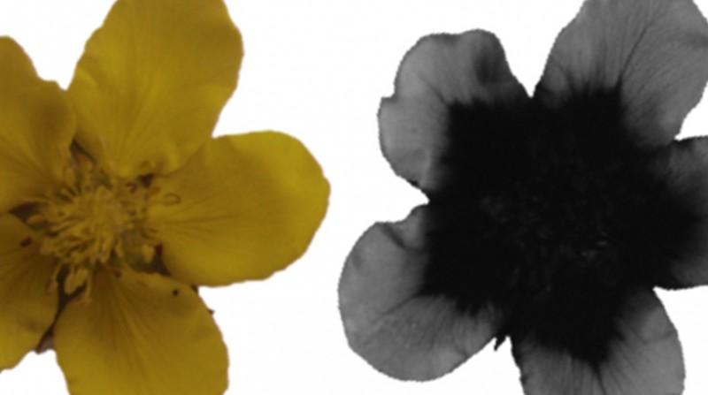 النحل يرى الأزهار بشكل مختلف عن الإنسان