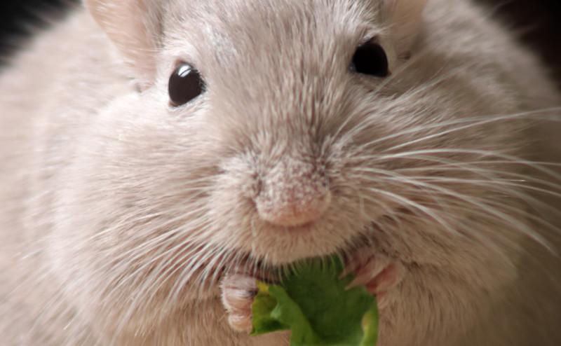 أول دليل على تسبب السمنة في سرطان البنكرياس