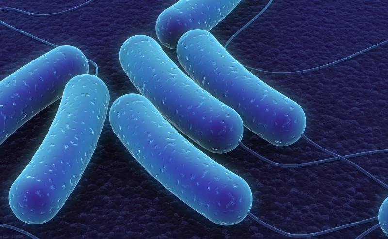 نظامك الغذائي يؤثر على بكتيريا الأمعاء أكثر من الجينات