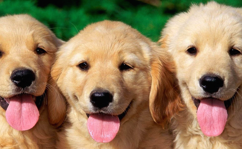 كيف تستغل الكلاب هرموناتنا لتحرك عواطفنا