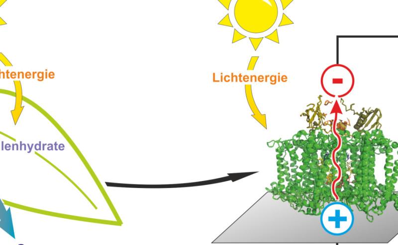 """""""أوراق نباتات اصطناعية"""" لتوليد الوقود الهيدروجيني"""