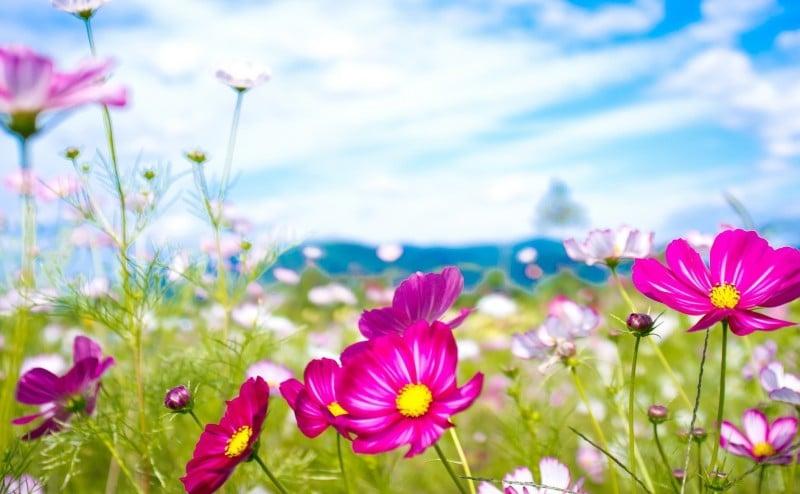 الاستجابة المناعية للجسم تصبح أقوى في فصل الصيف