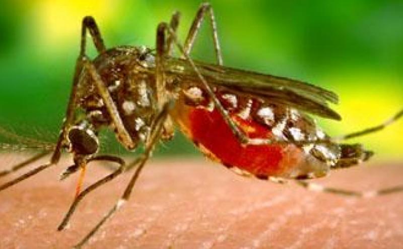 اكتشاف لقاح جديد للملاريا