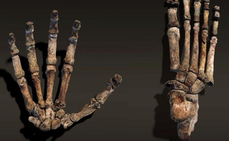 اكتشاف عظم يد إنسانية مستقيم يعود إلى مليوني عام