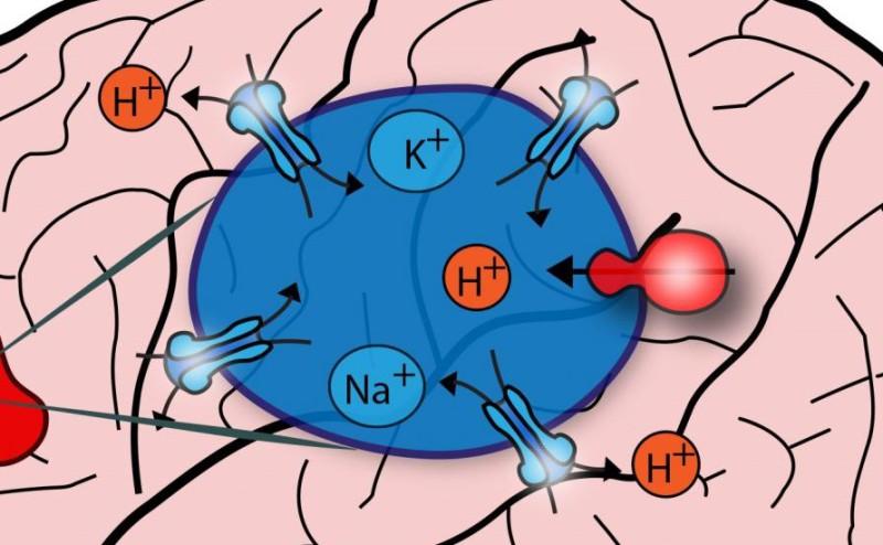 البروتين الذي يوقظ الدماغ من النوم قد يكون وسيلة للوقاية من الزهايمر