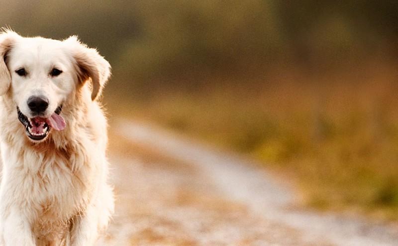 الكلاب تساعد على تخفيف القلق لدى البشر