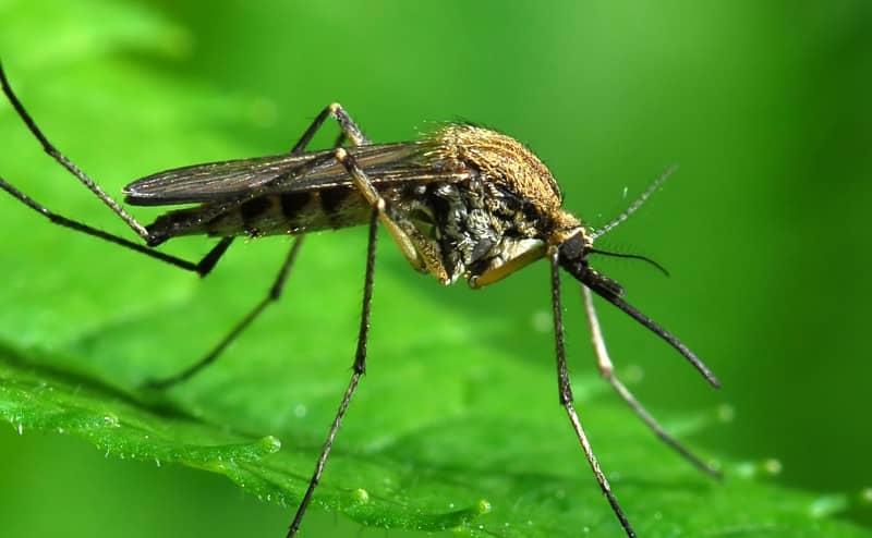 البعوض هو سلاح الدمار الشامل المستقبلي