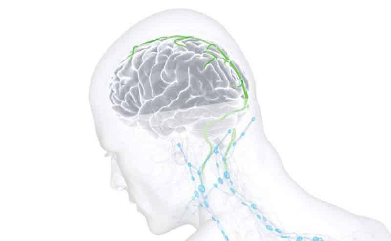 اكتشاف جزء جديد في جسم الإنسان يمكن أن يحدث ثورة في أبحاث الدماغ