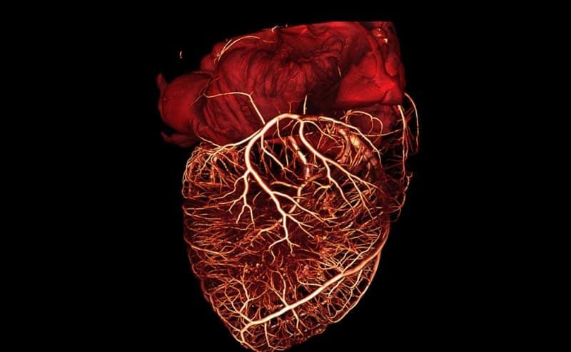 صناعة أوعية دموية بشرية باستخدام طابعة ثلاثية الأبعاد