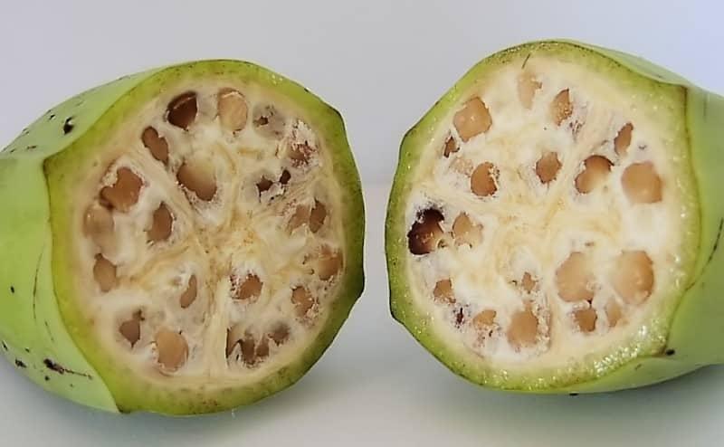 كيف كان شكل الفواكه والخضروات قبل أن نقوم بتهجينها؟