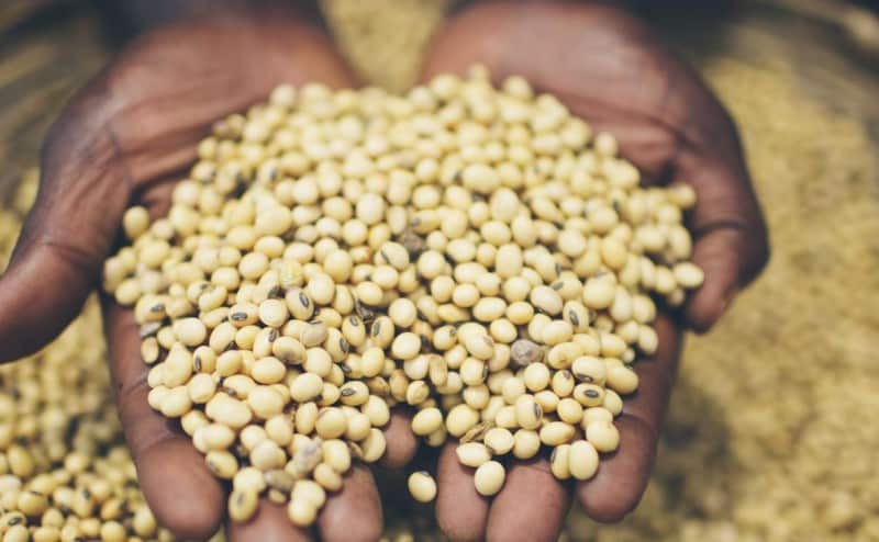 ما لا تعرفه عن الأمن الغذائي في العالم….إحصاءات وأرقام