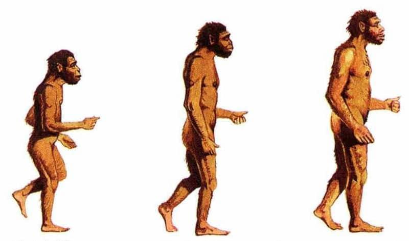 5 مفاهيم خاطئة عن نظرية التطور