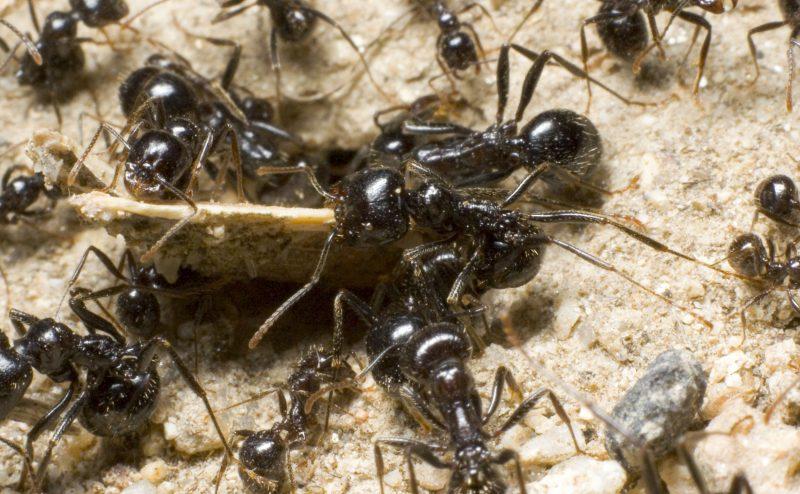 المحطات المخصصة في عالم النمل….تكتيك أم وسيلة دفاع؟