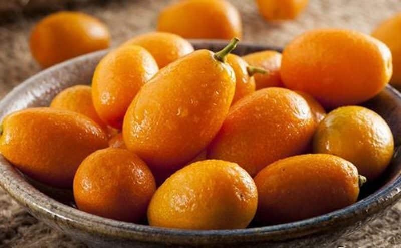 """الكمكوات """" شجرة البرتقال الذهبى """""""