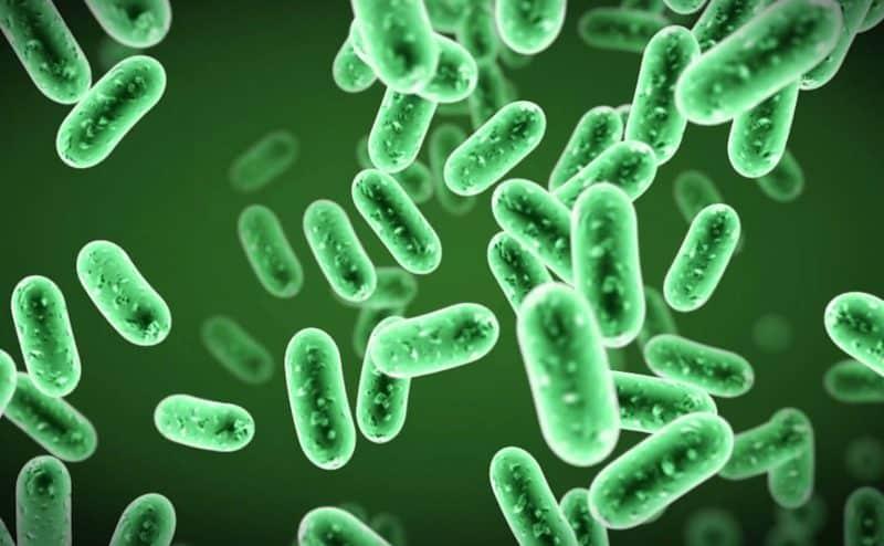 كيف نتغلب على البكتيريا؟