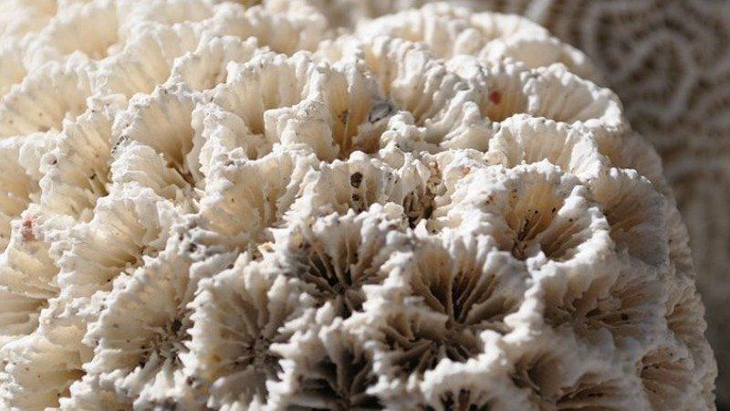 تنقذ المحيط من التحول إلى بيت للأشباح.. اكتشاف جينات تحمي الشعاب المرجانية