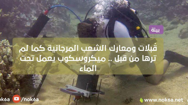 قُبلات ومعارك الشعب المرجانية كما لم ترها من قبل .. ميكروسكوب يعمل تحت الماء