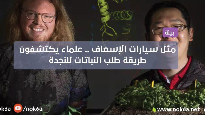 مثل سارينات الإسعاف .. علماء يكتشفون طريقة طلب النباتات للنجدة