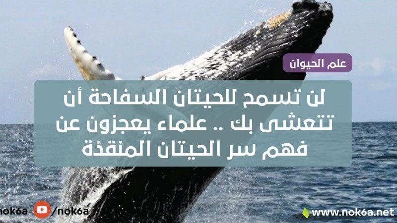 لن تسمح للحيتان السفاحة أن تتعشى بك .. علماء يعجزون عن فهم سر الحيتان المنقذة