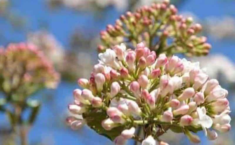 أهمية الازهار الحولية الشتوية فى تنسيق الحدائق