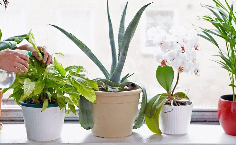 هل يمكن للنباتات المنزلية أن تكون مؤذية للبشر؟