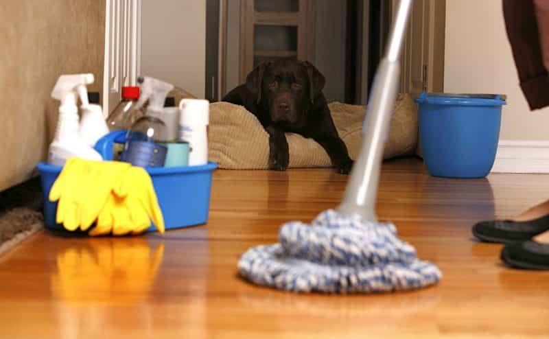 كيف تتخلص من رائحة المنزل الكريهة في خطوات بسيطة؟