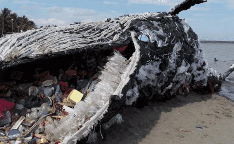5 أضرارٍ وفائدة واحدة يقدمها البلاستيك للبيئة، تعرّف عليها..