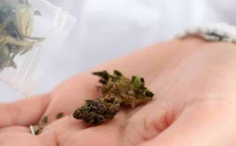 حظر استخدام الماريجوانا في علاج انقطاع التنفس النومي