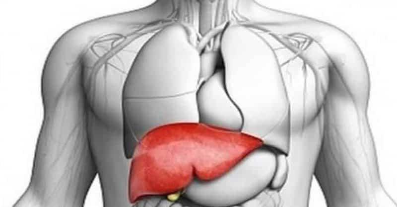 كيف نحافظ على صحة الكبد عبر غذائنا؟