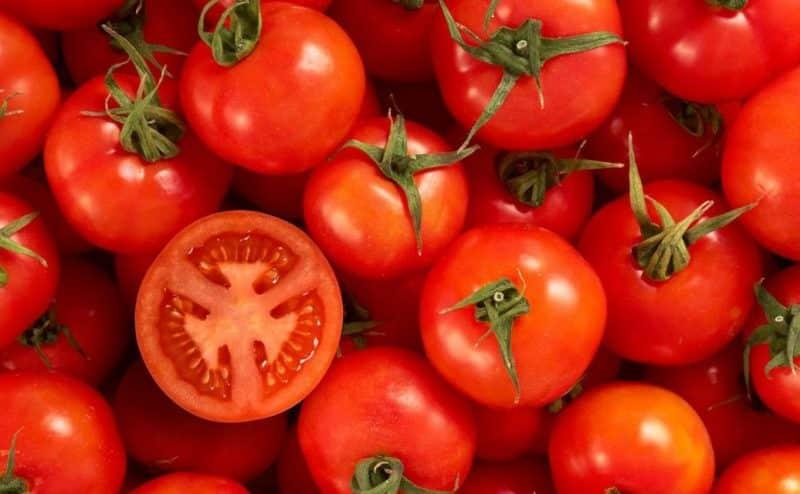 الطماطم الفائقة دليل على ما وصل إليه علماء النبات