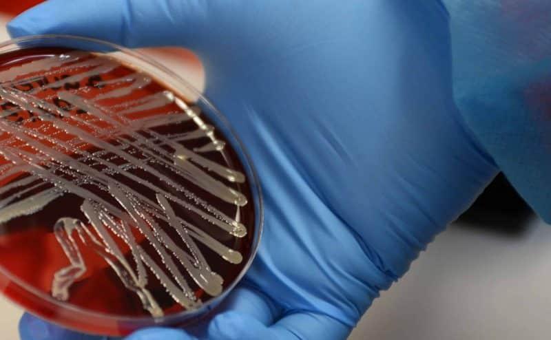 ميكروبات المعدة