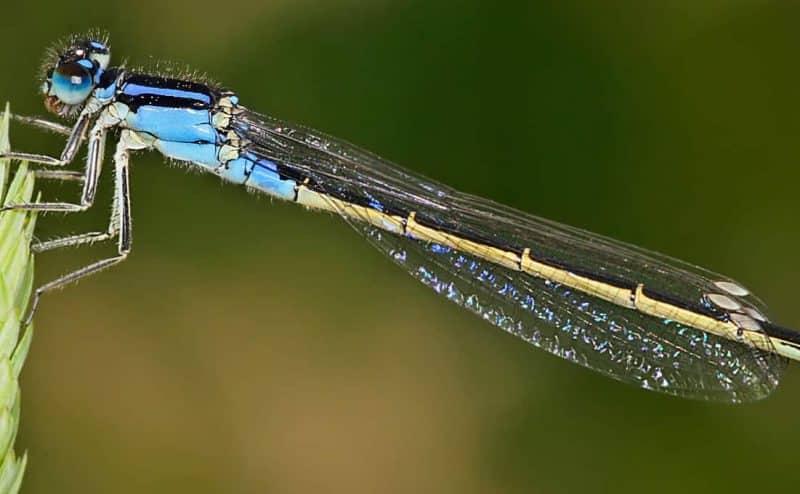 """العلماء يحذرون: إنقراض الحشرات السريع كارثة تهدد """"بقاء البشرية"""""""