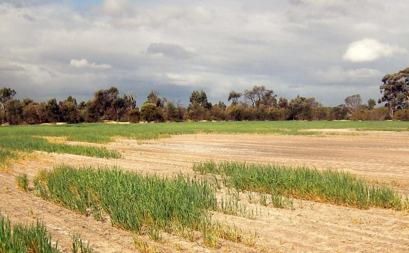 هل يستطيع العالم العربي حل مشكلة ندرة المياه؟