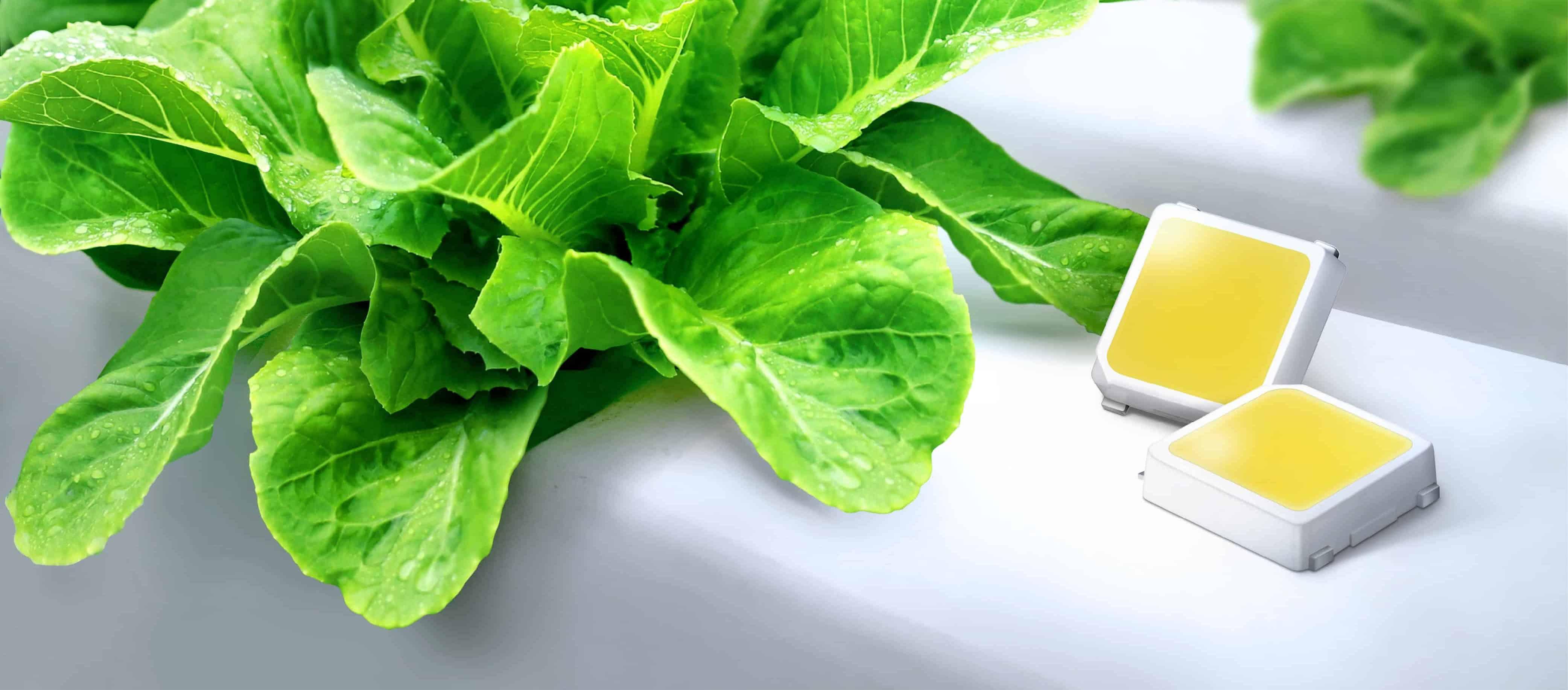 شركة سامسونج تعلن عن تصنيع أضواء LED جديدة ستغير الزراعة