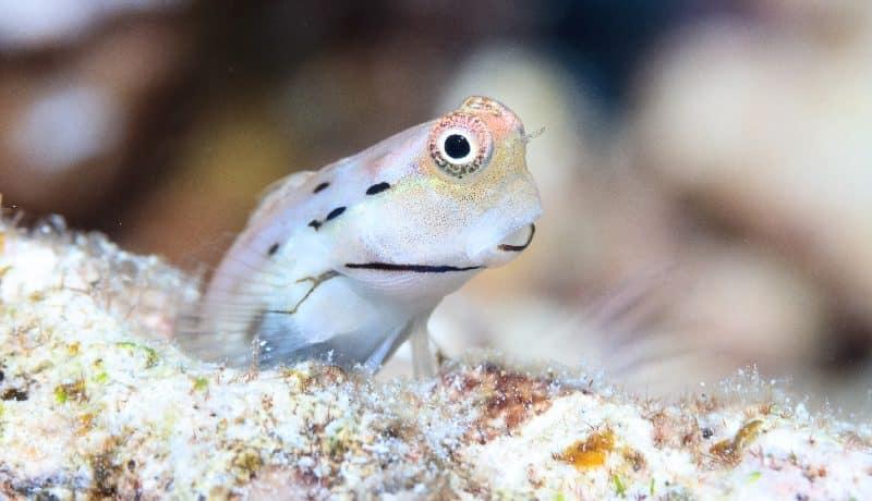 أسماك لا يزيد حجمها عن الخنصر توفر الكثير من الطعام في الشعاب المرجانية