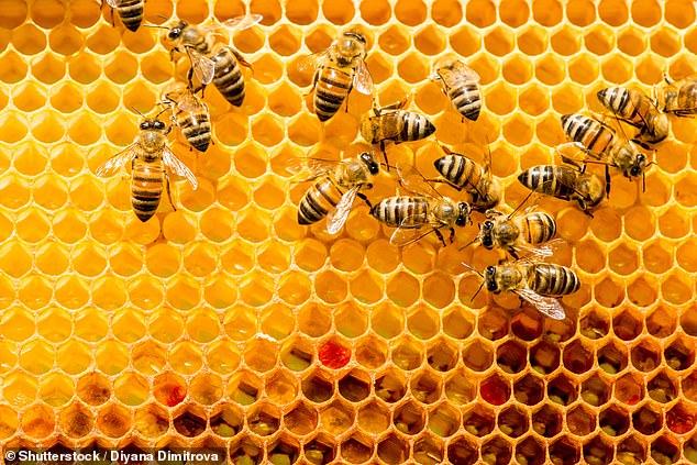 النحل البالغ ينقل الجزيئات المعززة للمناعة إلى اليرقات