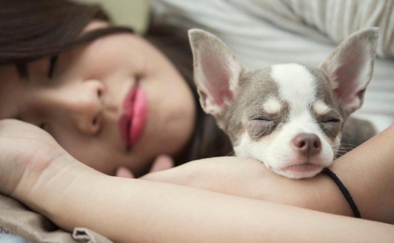 النوم إلى جانب كلب يؤثر إيجابيا على نوعية النوم عند النساء