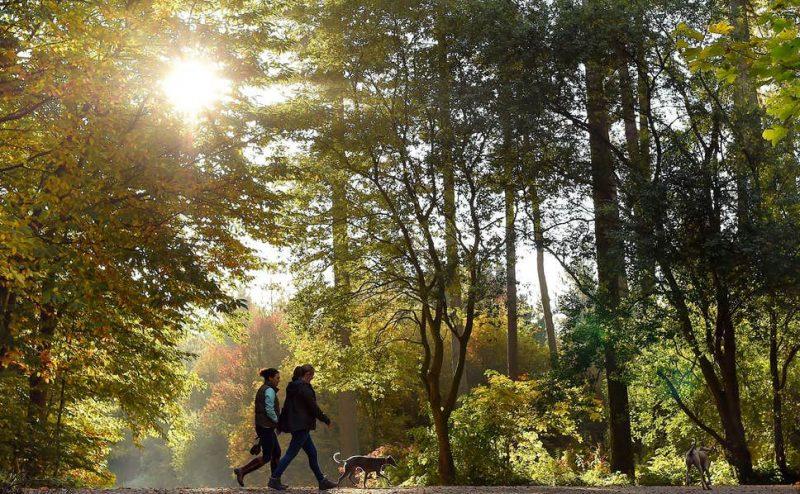 الانغماس في الطبيعة مفيد لصحتك لكن الحدائق لا تتوفر للجميع