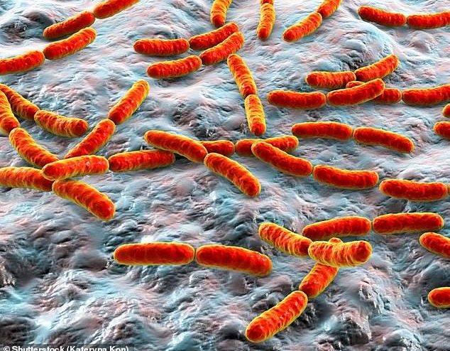 """هل يمكن علاج التوحد بالبكتيريا النافعة """"كبسولات بروبيوتيك"""""""