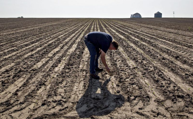 المزارعون الأمريكيون يضغطون لإنهاء الحرب التجارية