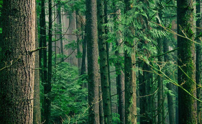 هل من شأن زراعة تريليون شجرة أن تنقذنا من تغير المناخ؟