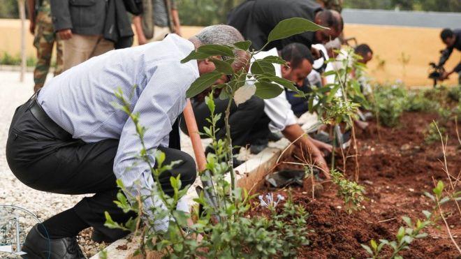 إثيوبيا تحطم الرقم القياسي العالمي بزراعة أكثر من 350 مليون شجرة لمكافحة تغير المناخ