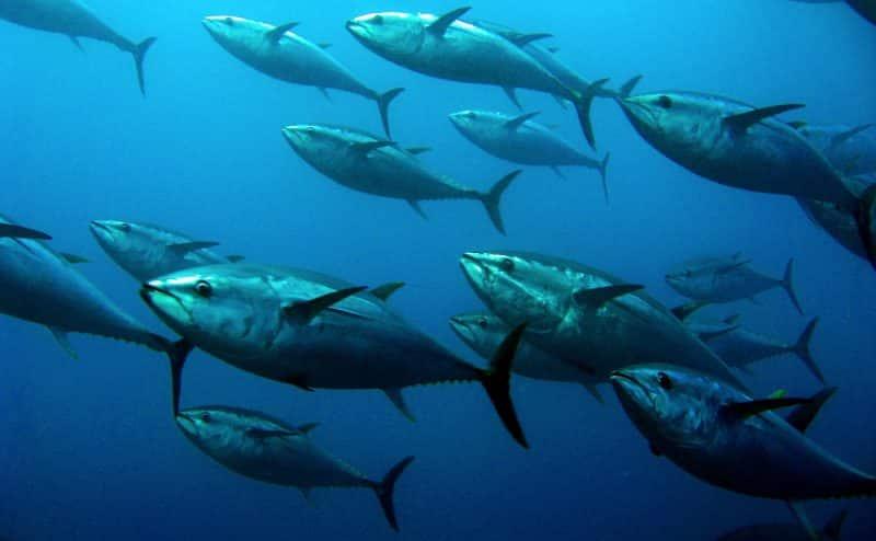 تغير المناخ والصيد الجائر يجعلان المأكولات البحرية أكثر سمية